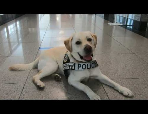Tennessee Welcomes First K-9 Dog to find Electronic USB Storage Devices